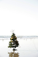 Lone christmas tree decorated with seaweed and a star sits on the beach alone surrounded by seagulls for the holidays.