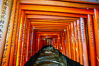 Thousands of torii gates lead up a mountain to the inner shrine, Fushimiinari-Taisha Shrine, Kyoto, Japan