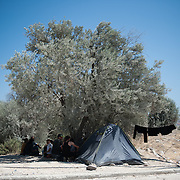 A refugees' tent at the entrance of Kara Tepe camp. Because of the dusty conditions the tree has turned white.