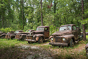 Roadside Ford truck collection on the Big Bend Scenic Byway in Crawfordville, Florida.