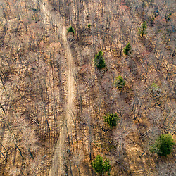 Drone view of a dirt road in a forest in Johnsonburg, Pennsylvania. Spring.
