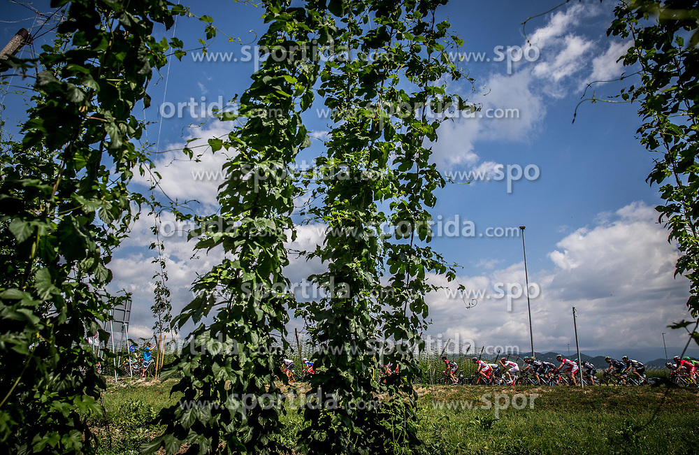 Peloton at Zalec during Stage 3 of 24th Tour of Slovenia 2017 / Tour de Slovenie from Celje to Rogla (167,7 km) cycling race on June 16, 2017 in Slovenia. Photo by Vid Ponikvar / Sportida