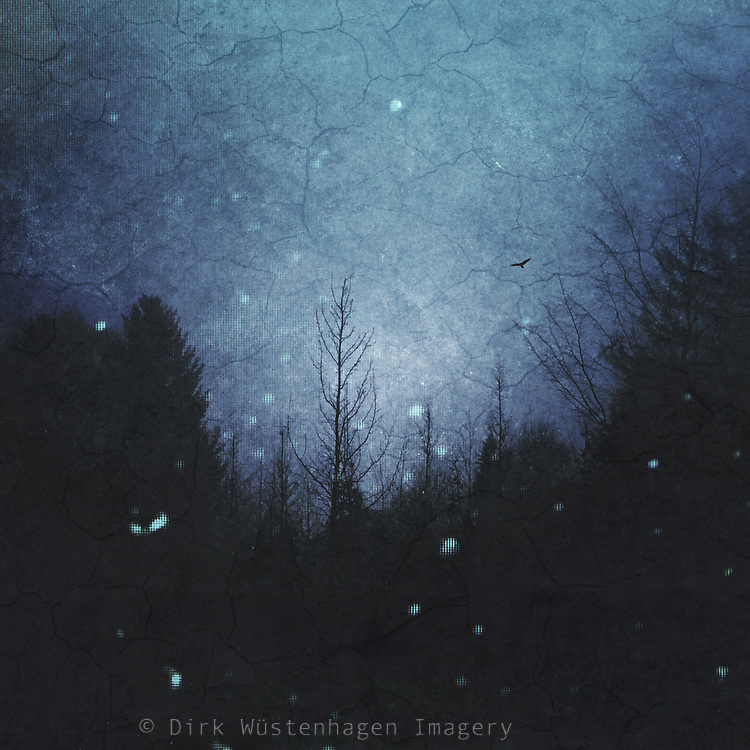 Tree silhouettes and mist at nightfall - textured photograph