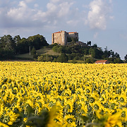 Sunflower field nearby the village Antiongt with old French house on a hill in the back. Auvergne, France