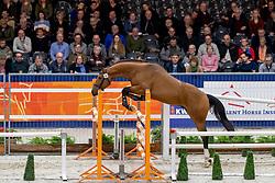 046, Meilleur Tarpania<br /> KWPN hengstenkeuring - 's Hertogenbosch 2020<br /> © Hippo Foto - Dirk Caremans<br />  30/01/2020
