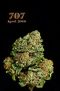 707 nug photos shot in a professional photography studio.