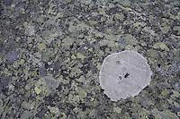 Map lichen (Rhizocarpon Geographicum) patterns, Sarek National Park, Laponia World Heritage Site, Sweden