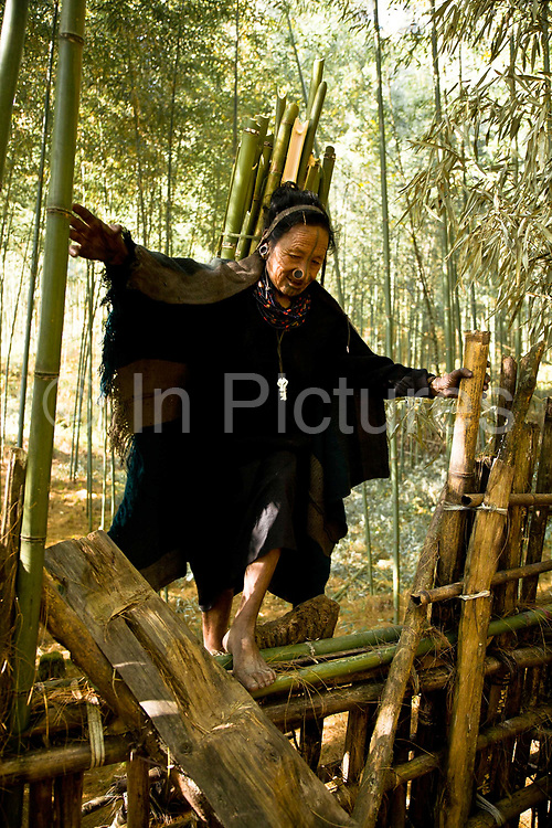 Apatani tribal elder Atta Yadd  returns home after having  cut bamboo in the forests surrounding their village of Hijja, Arunachal Pradesh. The Apatani tribe are one of hundreds of indigenous tribes scattered across India, particularly the north east. Their origins are from Mongolian nomadic tribes whom settled on the Ziro plateau, close to the Chinese border, they practice fixed agriculture as well as forestry, planting trees on the rim of the plateau as well as bamboo forests from which they derive fire wood, building their homes as well as using the bamboo for all manner of applications in their daily lives, cooking utensils and household containers amongst other uses. They carefully cultivate bamboo forests allowing them to grow, but not flower and die, as this would spell disaster for their very own existence. They also tend to their rice fields and live stock for what is mostly a subsistence economy. The Indian constitution recognizes over 500 indigenous tribes, which account for 8.5% of the total population