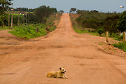 Leme do Prado_MG, Brasil...Cachorro em uma estrada de terra em Leme do Padro, Minas Gerais...A dog on the dirty road in Leme do Padro, Minas Gerais...Foto: LEO DRUMOND / NITRO.