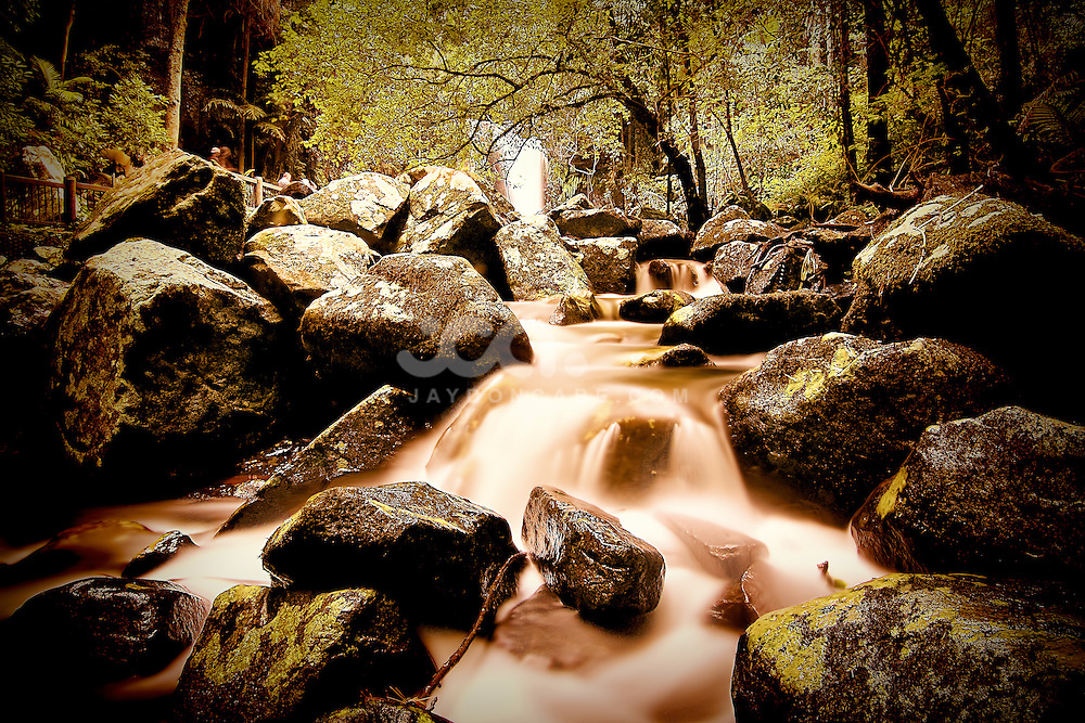 Nature Photos by jaydon Cabe