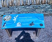 Shetland Island birds. Shetland Islands Field Trip. Image taken with a Nikon Df camera and 300 mm f/2.8 VR lens.