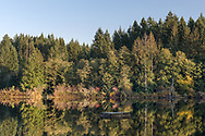 Reflections along the shore of Stowell Lake on Salt Spring Island, British Columbia, Canada