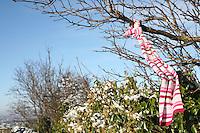 lost scarf tied to tree on Dalkey Hill Dublin Ireland November 2010