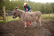 Kerry gives Pablo a brushing at Leaping Lamb Farm.