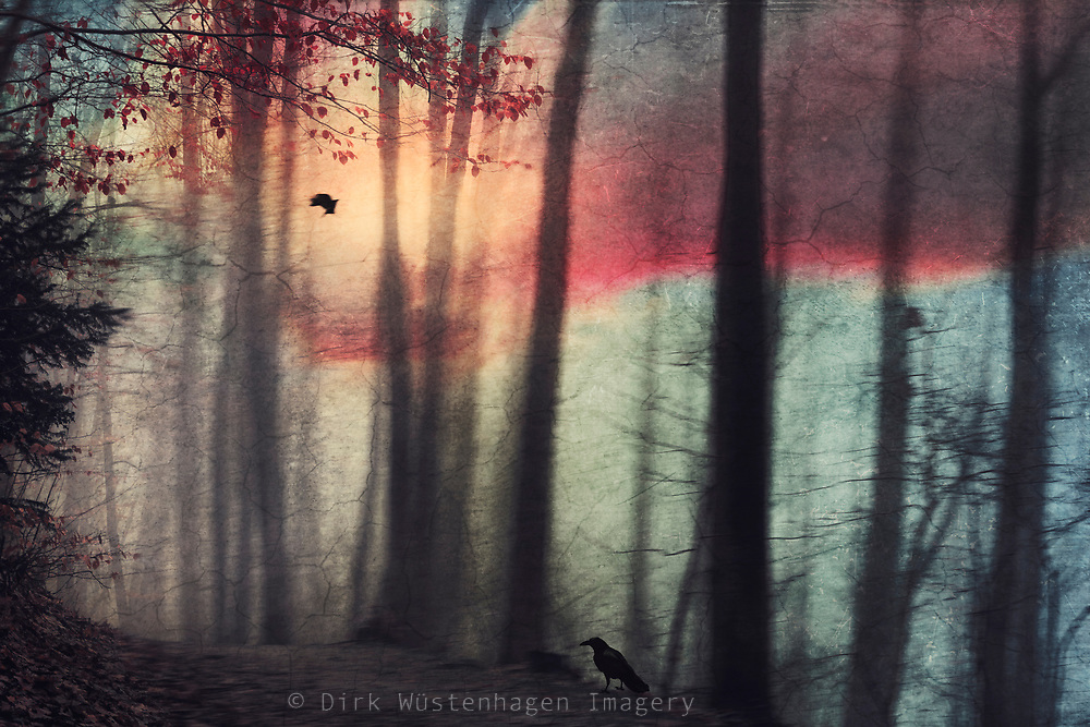 Crow on a forest path - painterly blurred forest at sunset