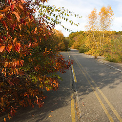 An abondoned road near the Common Pasture in Newburyport, MA.