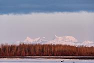 Hess Mountain, Mount Deborah and The Dorsal Fin, of the Alaska Range, as seen across the Tanana River in Nenana, Alaska.