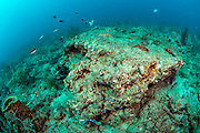 Sections of the Bath & Tennis Coral Reef offshore Palm Beach, Florida, United States, have been severely impacted by beach renourishment projects, sedimentation, hurricanes and scuba diving traffic.