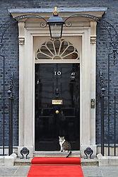 Larry the cat in Downing Street, London, as Prime Minister Theresa May welcomes US President Donald Trump on the second day of his state visit to the UK.