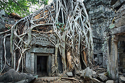 Banteay Kdei Temple entrance in early morning, overgrown with huge roots