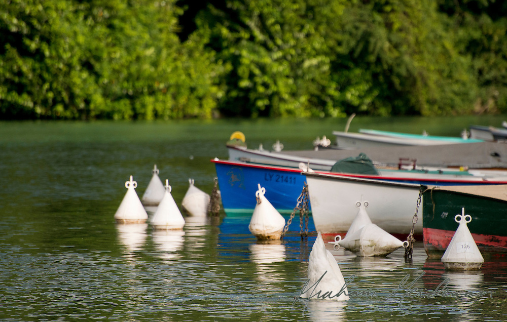 A bobbing swan blends in with buoys on the Lake in Annecy, France.