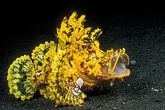 Indonesia Marine Life