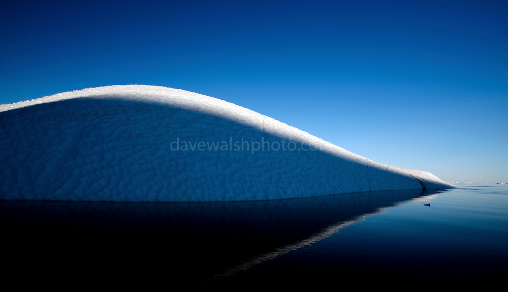 Sleeping Giant: Shadows from the Tailenguak Cliffs fall on an iceberg calved ans sculpted from the 110km wide Humboldt Glacier, Kane Basin, Nares Straight, Greenland, 16th July 2009. <br />