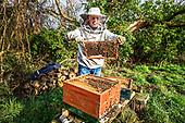 Beekeepers Netherlands
