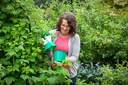 Checking a beetle trap which is being used to protect raspberry bushes.