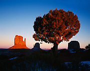Juniper with West and East Mitten Buttes beyond, Monument Valley Tribal Park, Navajo Reservation, Arizona.