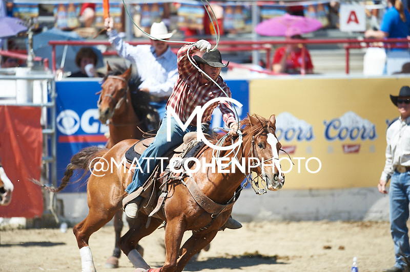 Team roper Jesse Sheffield of Delta, CO competes at the Redding Rodeo in Redding, CA<br /> <br /> <br /> UNEDITED LOW-RES PREVIEW<br /> <br /> <br /> File shown may be an unedited low resolution version used as a proof only. All prints are 100% guaranteed for quality. Sizes 8x10+ come with a version for personal social media. I am currently not selling downloads for commercial/brand use.