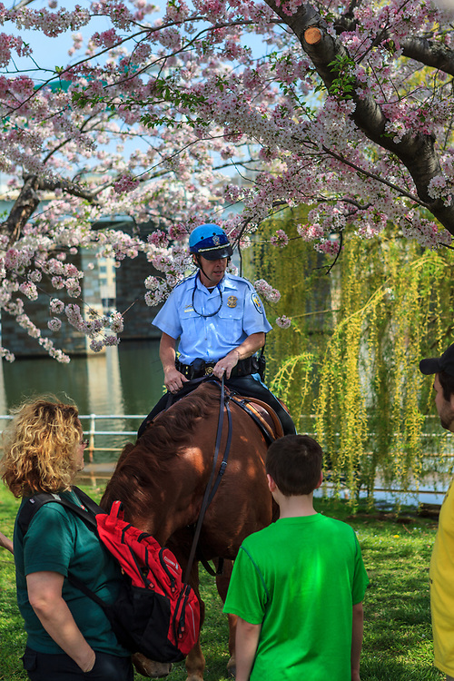 Washington, DC - April 11, 2013:  Mounted US Park Police officer speaks with visitors near the Jefferson Memorial during the cherry blossom season.