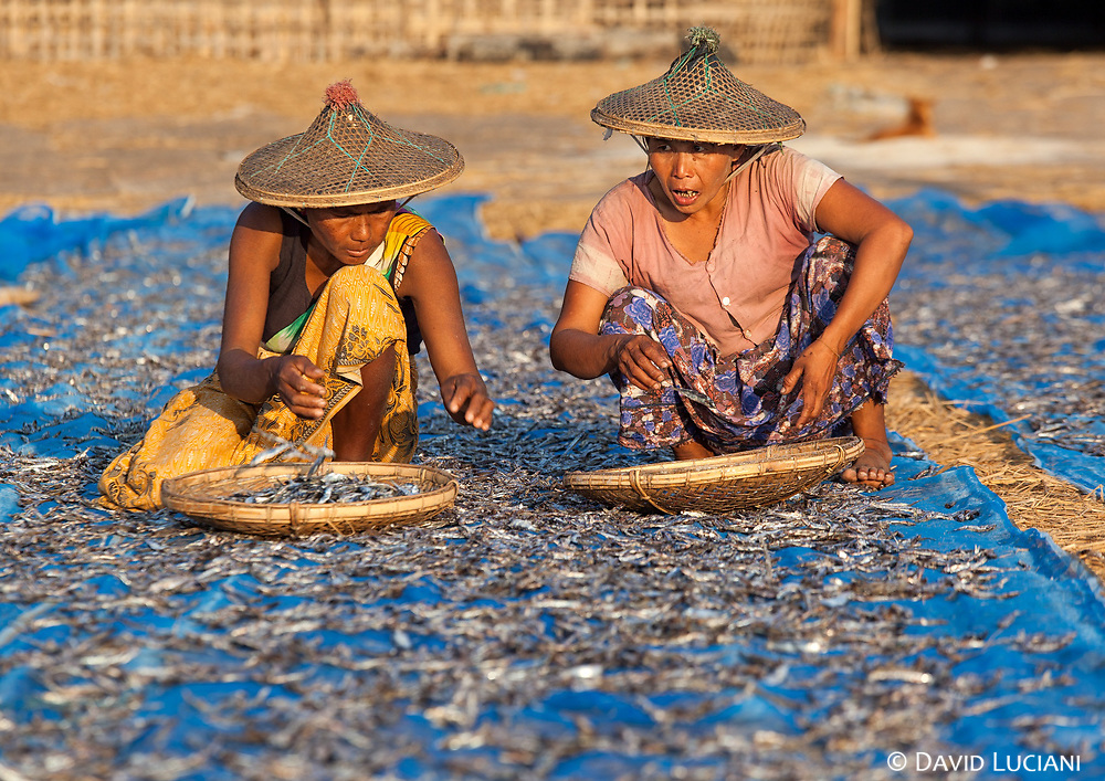 Women drying fish on a net at evening time.