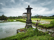 18 JULY 2016 - UBUD, BALI, INDONESIA:    Towers that house spirits for the rice fields near Ubud. Rice is an integral part of the Balinese culture. The rituals of the cycle of planting, maintaining, irrigating, and harvesting rice enrich the cultural life of Bali beyond a single staple can ever hope to do. Despite the importance of rice, Bali does not produce enough rice for its own needs and imports rice from nearby Thailand.    PHOTO BY JACK KURTZ