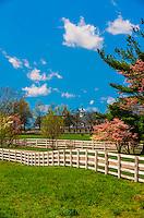 Manchester Farm, Lexington, Kentucky USA.