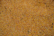 Corn, wheat and soybeans are the primary grain grown in Oklahoma.