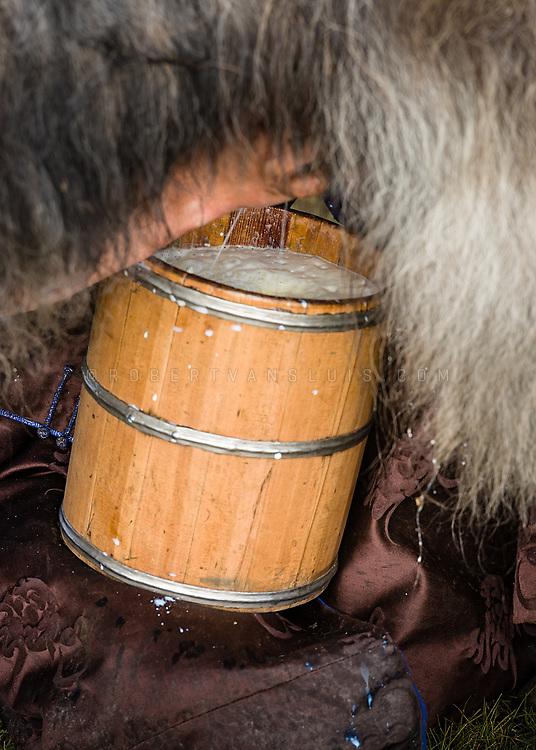 Close-up of a girl milking a yak in Khovsgol Province, Mongolia. Photo © Robert van Sluis