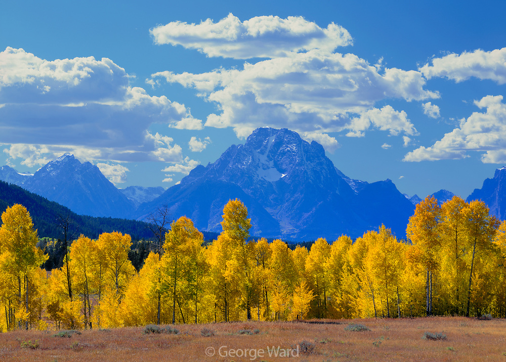 Aspen and Mount Moran, Grand Teton National Park, Wyoming