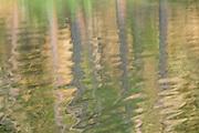 Forest Ripples, Manzanita Lake, California  2008