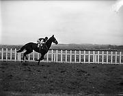 "27/01/1962<br /> 01/27/1962<br /> 27 January 1962<br /> Horse Racing - Celbridge Handicap Steeplechase at Naas. ""Carraroe"", with J.J. Rafferty up."