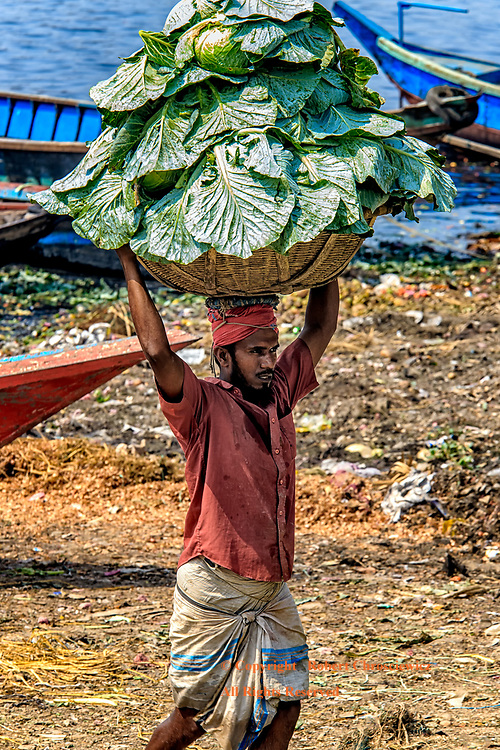 Heavy Load: A man carries yet another basket full of cabbage to the vegetable and fruit market, Dhaka Bangladesh.