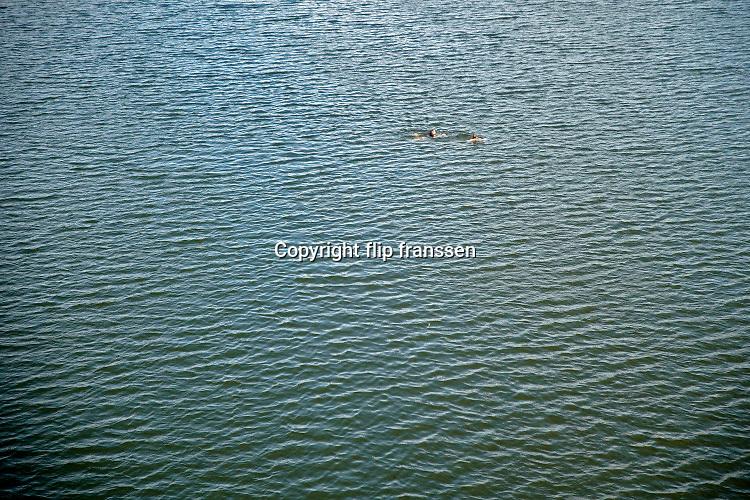 Nederland, Nijmegen, 25-6-2020Mensen trekken massaal naar de oevers van de waal en de spiegelwaal in het rivierpark aan de overkant van Nijmegen . De warmte, hoge temperatuur,  drijft mensen naar het water  . Het is verboden in de rivier te zwemmen vanwege de stroming het het drukke scheepvaartverkeer .  . Foto: Flip Franssen