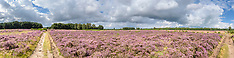 Panorama Heathland Het Gooi, Netherlands