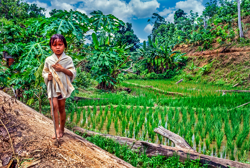 Young child standing alone in paddy field, Borneo, Malaysia, SE Asia