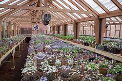 The hepatica greenhouse at Ashwood Nurseries