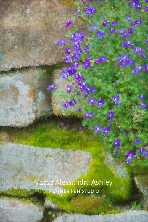 Blue rock cress flowers growing on stone garden wall in early spring. Abstract painted effects blended with original image.