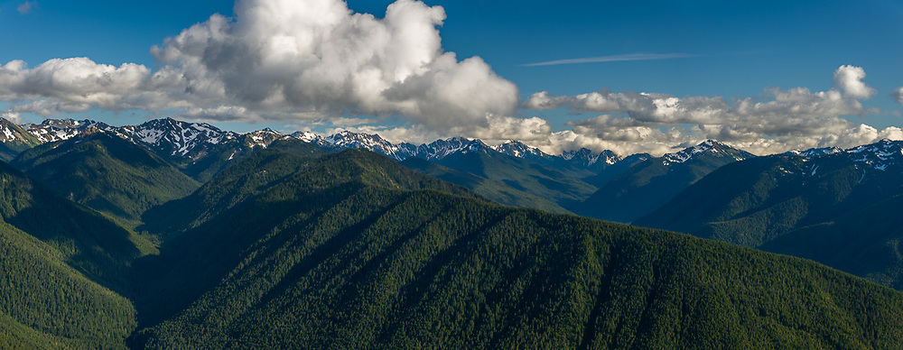 Panorama of the Olympic Mountains and Elwha River watershed, evening light, August, view from Hurricane Ridge, Olympic National Park, Clallam County, Washington, USA