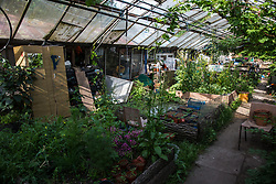Sipson, UK. 5th June, 2018. A greenhouse in which plants are cultivated is pictured at Grow Heathrow. Grow Heathrow is a squatted off-grid eco-community garden founded in 2010 on a previously derelict site close to Heathrow airport to rally support against government plans for a third runway and it has since made a significant educational and spiritual contribution to life in the Heathrow villages, which remain threatened by Heathrow airport expansion.