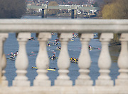 Chiswick, London, Great Britain.<br /> Looking through Chiswich Bridge towards Kew Rail Bridge withe the competing crews marshall for teh start of the 2016 Schools Head of the River Race, Reverse Championship Course Mortlake to Putney. River Thames.<br /> <br /> Thursday  17/03/2016<br /> <br /> [Mandatory Credit: Peter SPURRIER;Intersport images]