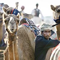 Dubai, United Arabs Emirates, 24 November 2008 <br /> Robot controlled camel race in Dubai.<br /> Photo: Ezequiel Scagnetti